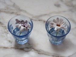 Margaritas: una en agua normal y otra en agua viva tras cinco días