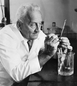 11 Nov 1955 --- Nobel Prize-winning biochemist Dr. Albert Szent-Gyorgyi is famous for discovering vitamin C. His work with plant bioflavinoids may prove valuable to a wide variety of ailments, from the common cold to heart disease. Bioflavinoids improve uptake and utilization of vitamin C. --- Image by © Bettmann/CORBIS