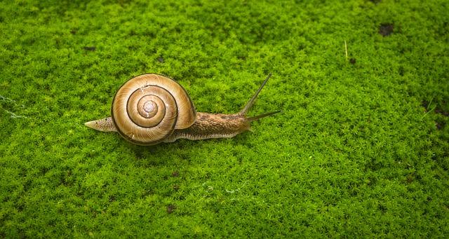 espiral en caracol